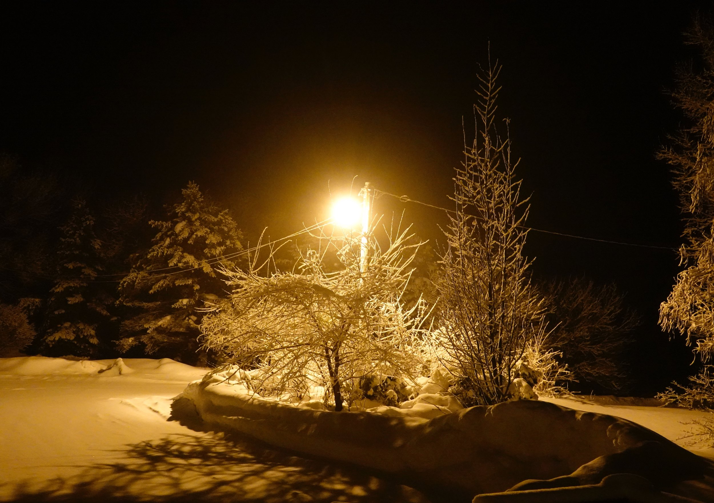Winter by yard light.