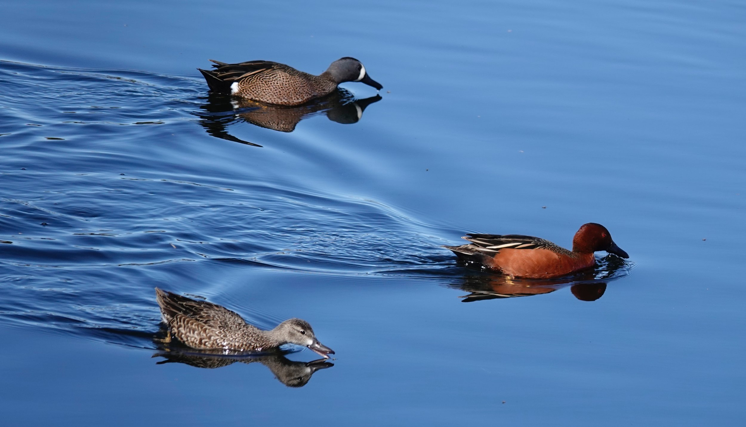 A trio of teal.