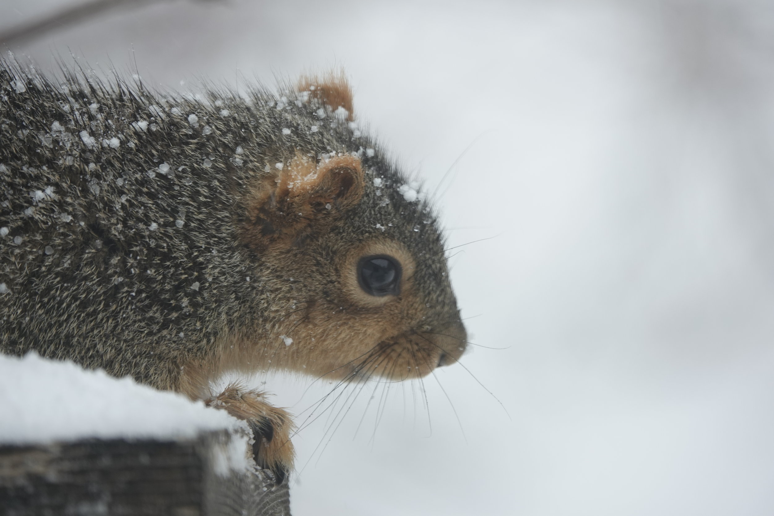 It wasn't long ago when this squirrel watched winter go by.