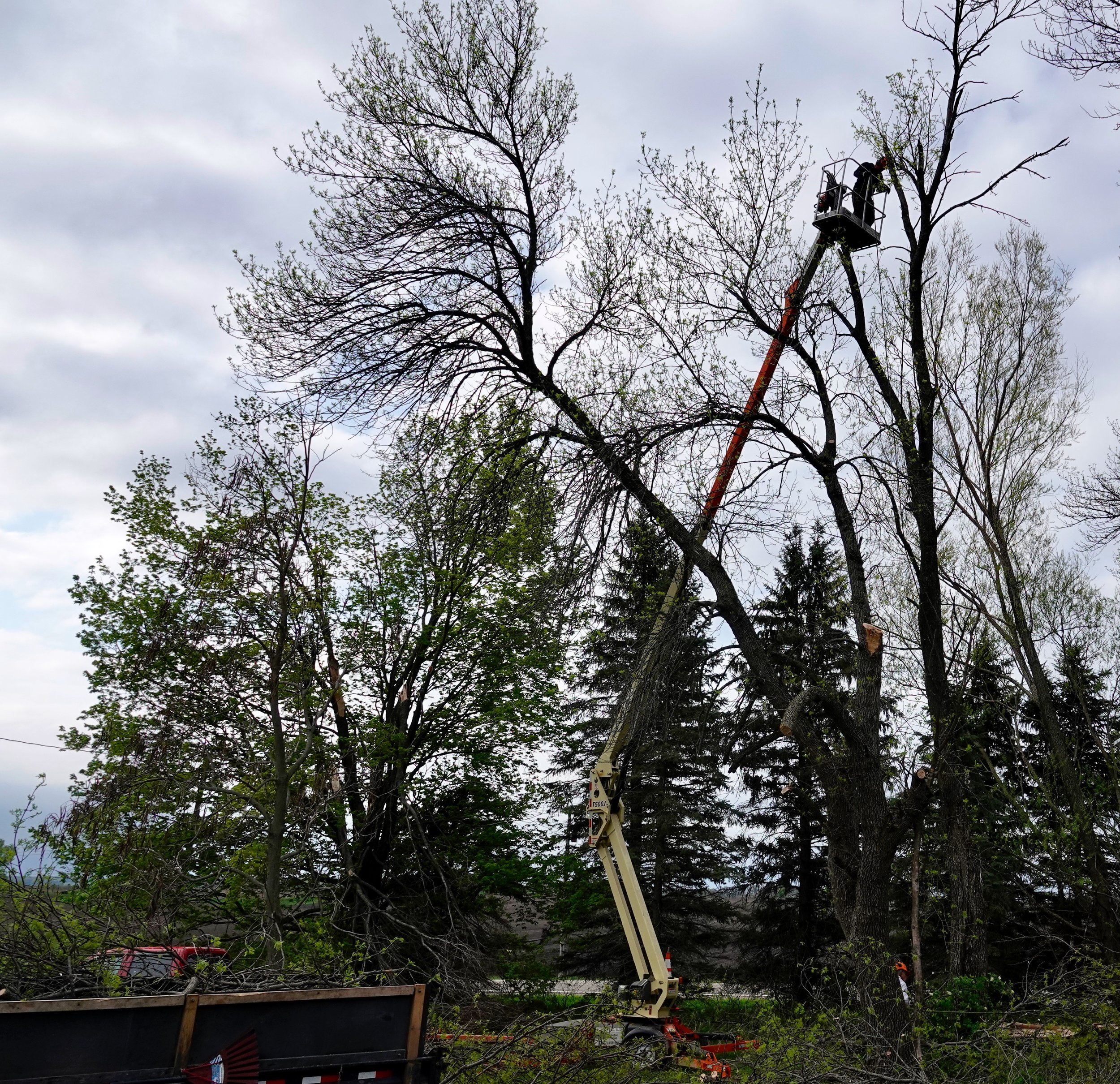 The April ice storm was hard on the yard trees.  Gordy Ebnet rose high and higher to trim damaged branches.