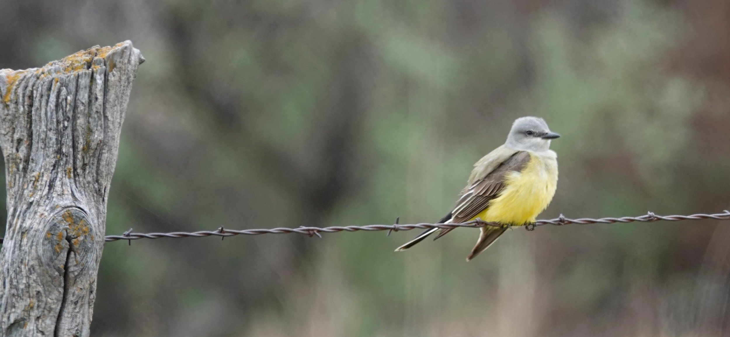 I canoed the Missouri River. My alarm clocks were the Western Kingbirds. They had no snooze alarms to punch.
