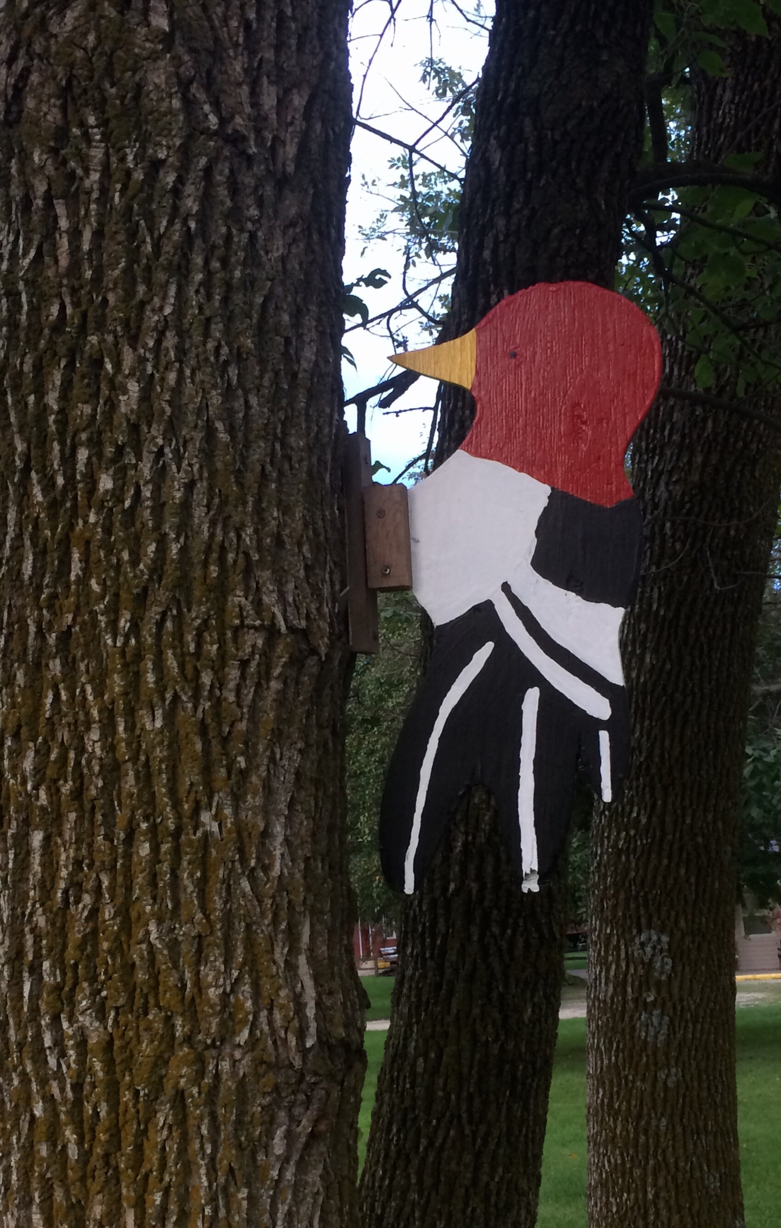 Letting Red-headed Woodpeckers know they are welcome.
