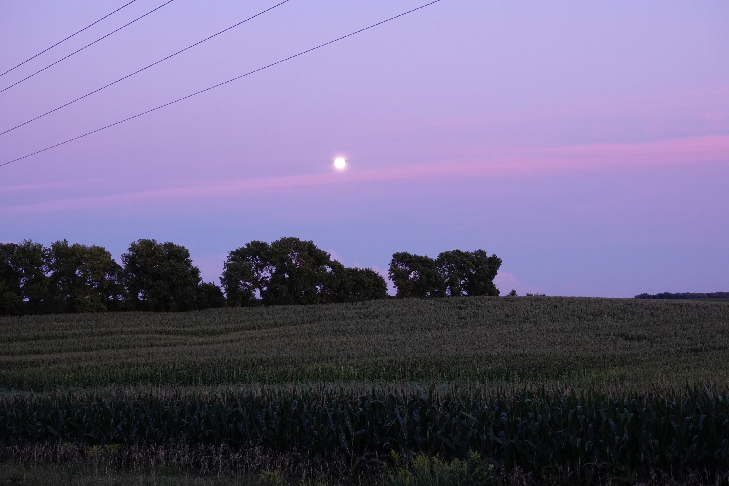 The moon causing waves over a cornfield.