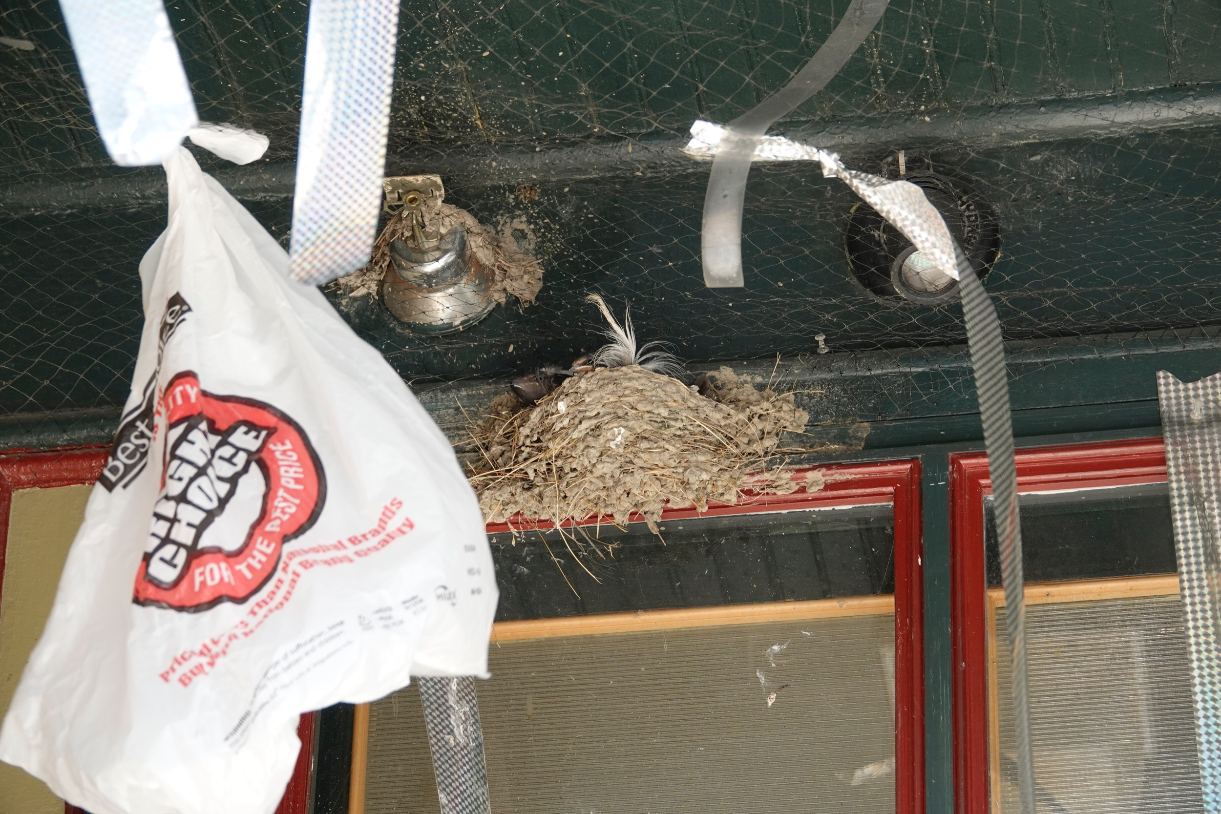 Despite a friend's attempt to discourage nesting, the barn swallows persevered.