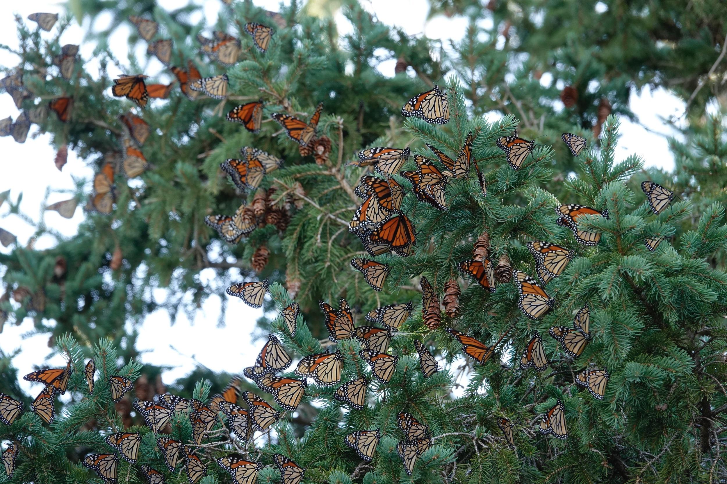 """""""No garden truly blooms until butterflies have danced upon it."""" — Kristen D'Angelo"""