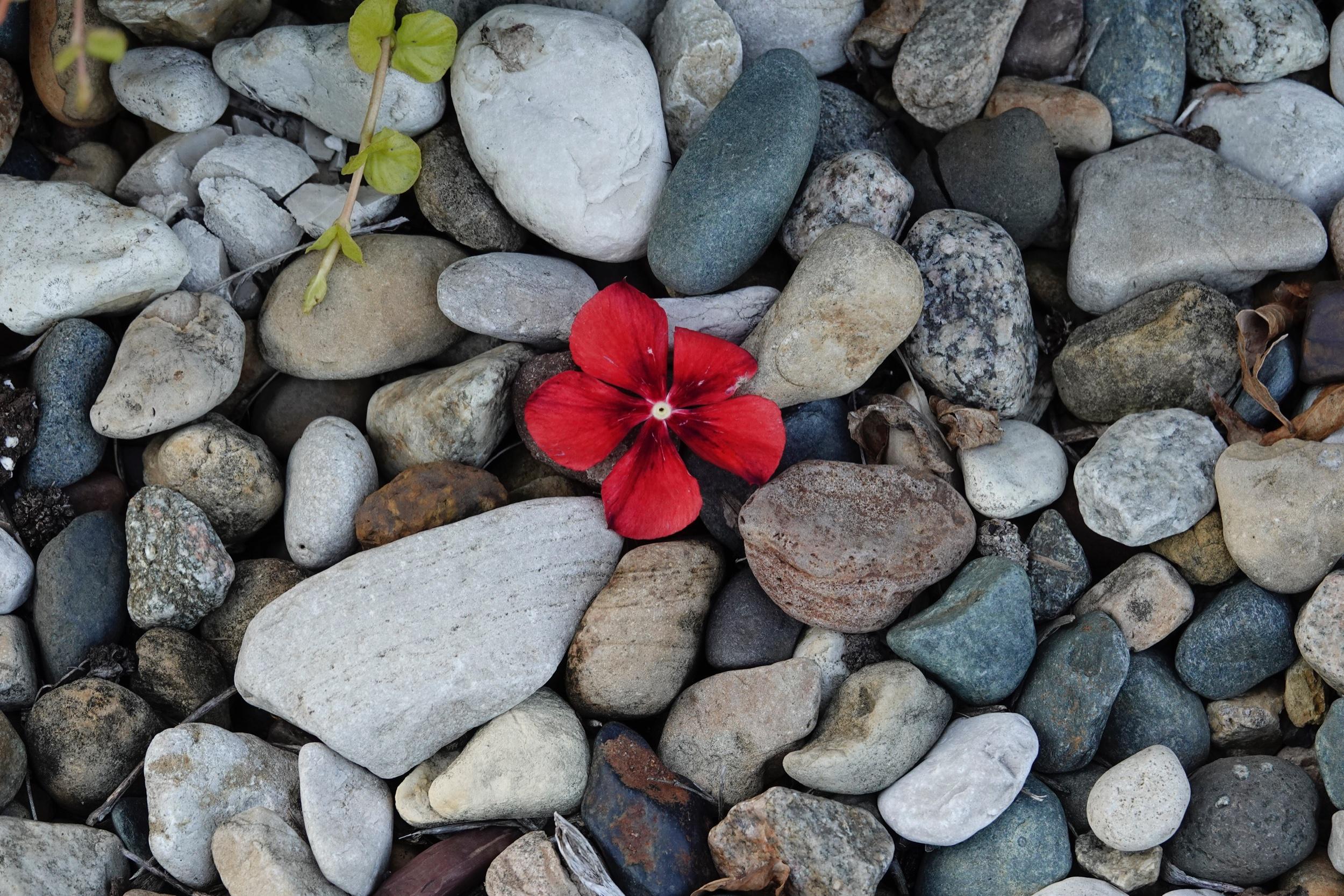 Those blooming rocks or rocks in bloom.