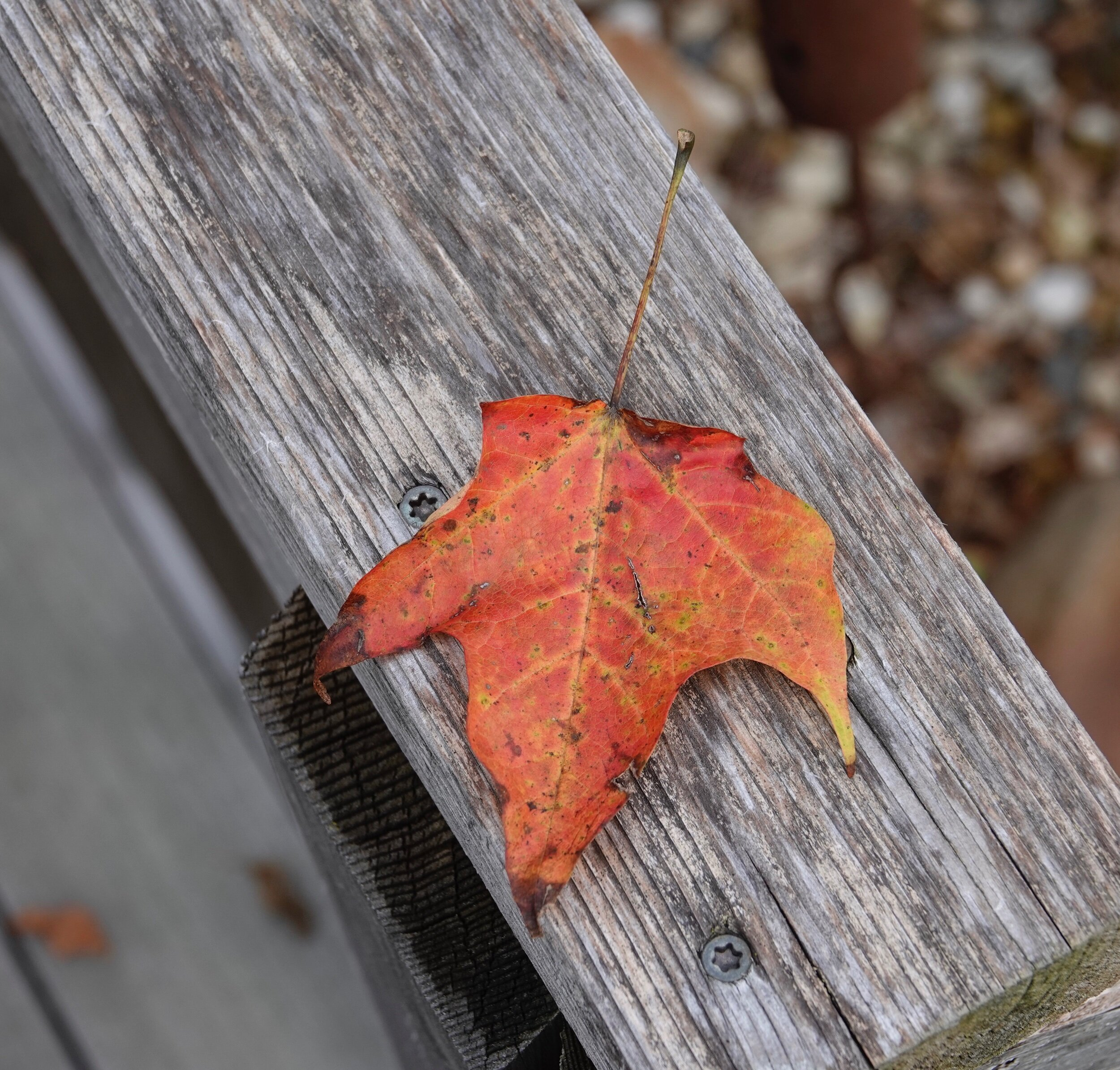 Fall is when leaves jump from trees and then dance with the wind.