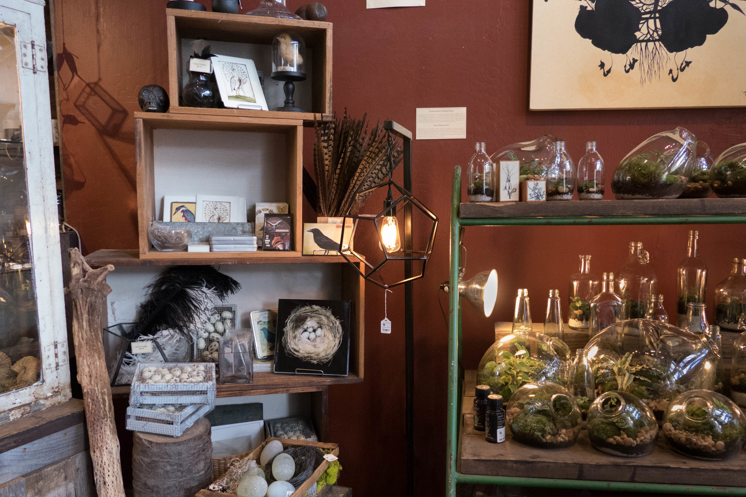 The dodecahedron floor lamp, nestled amongst feathers, eggs, terrariums, and other curiosities at Paxton Gate in San Francisco.