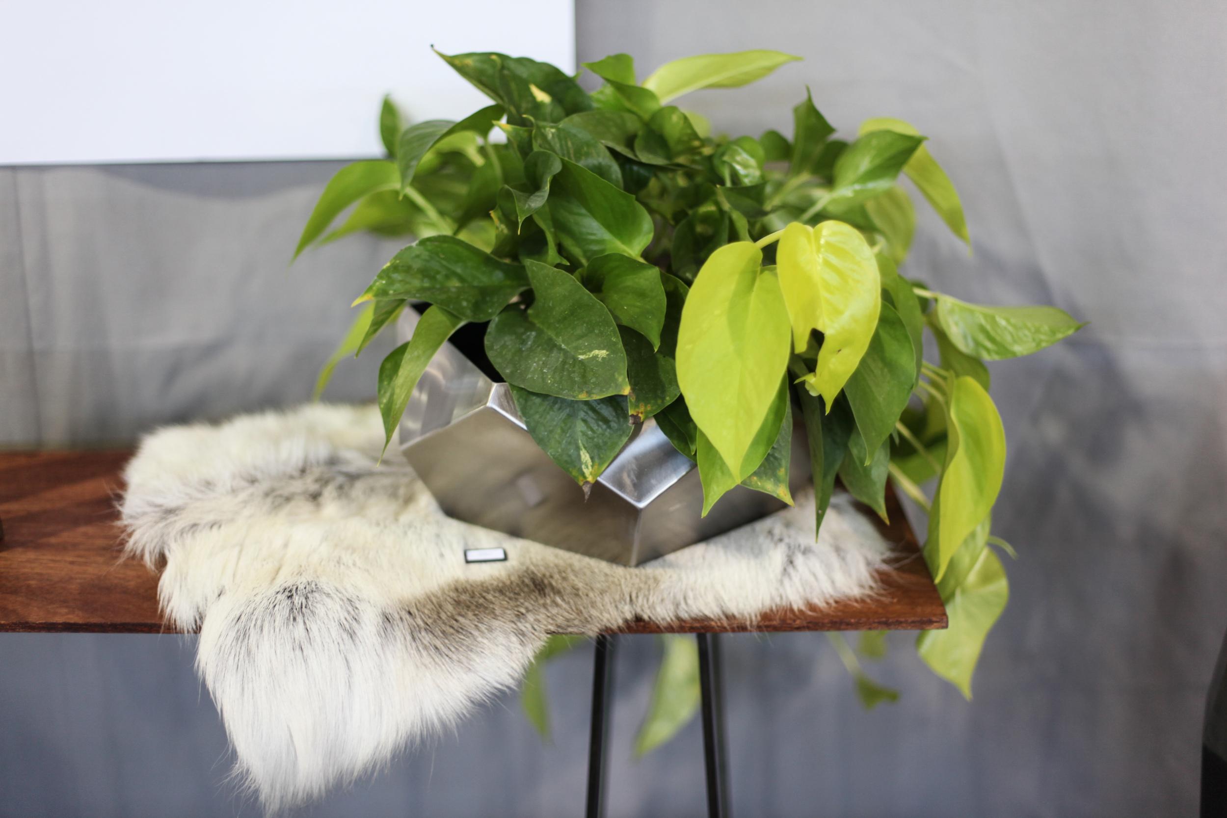 geo-bowl-plant