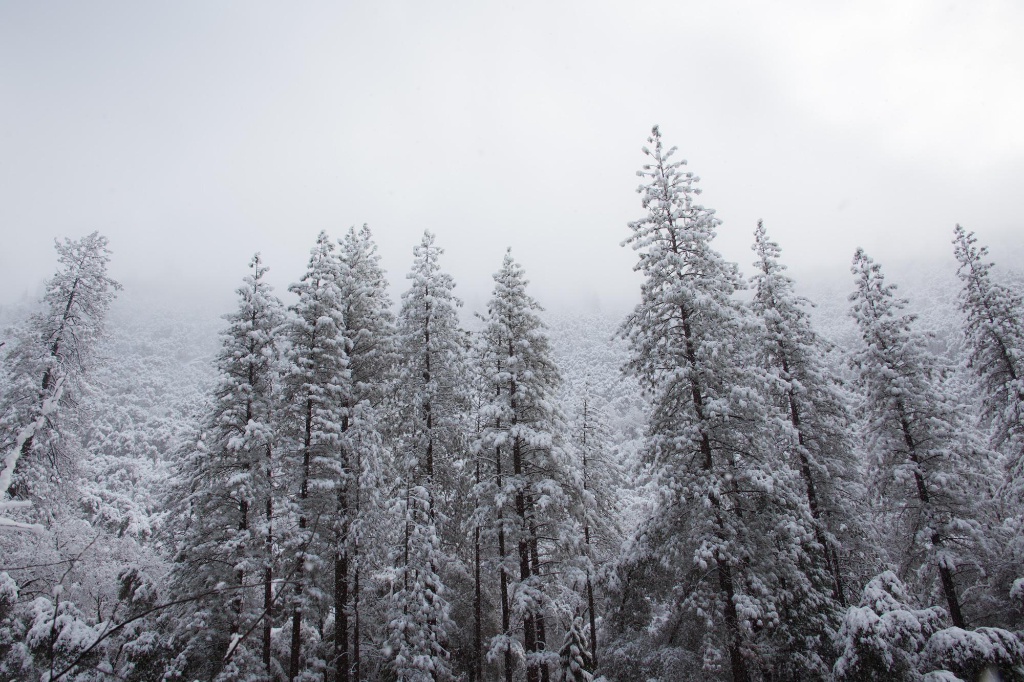 2019-02 Yosemite-3.jpg