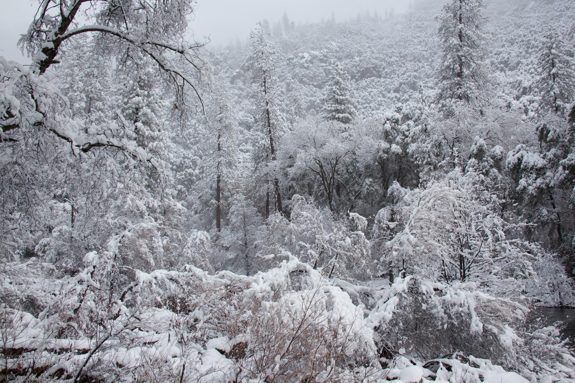 2019-02 Yosemite-19.jpg