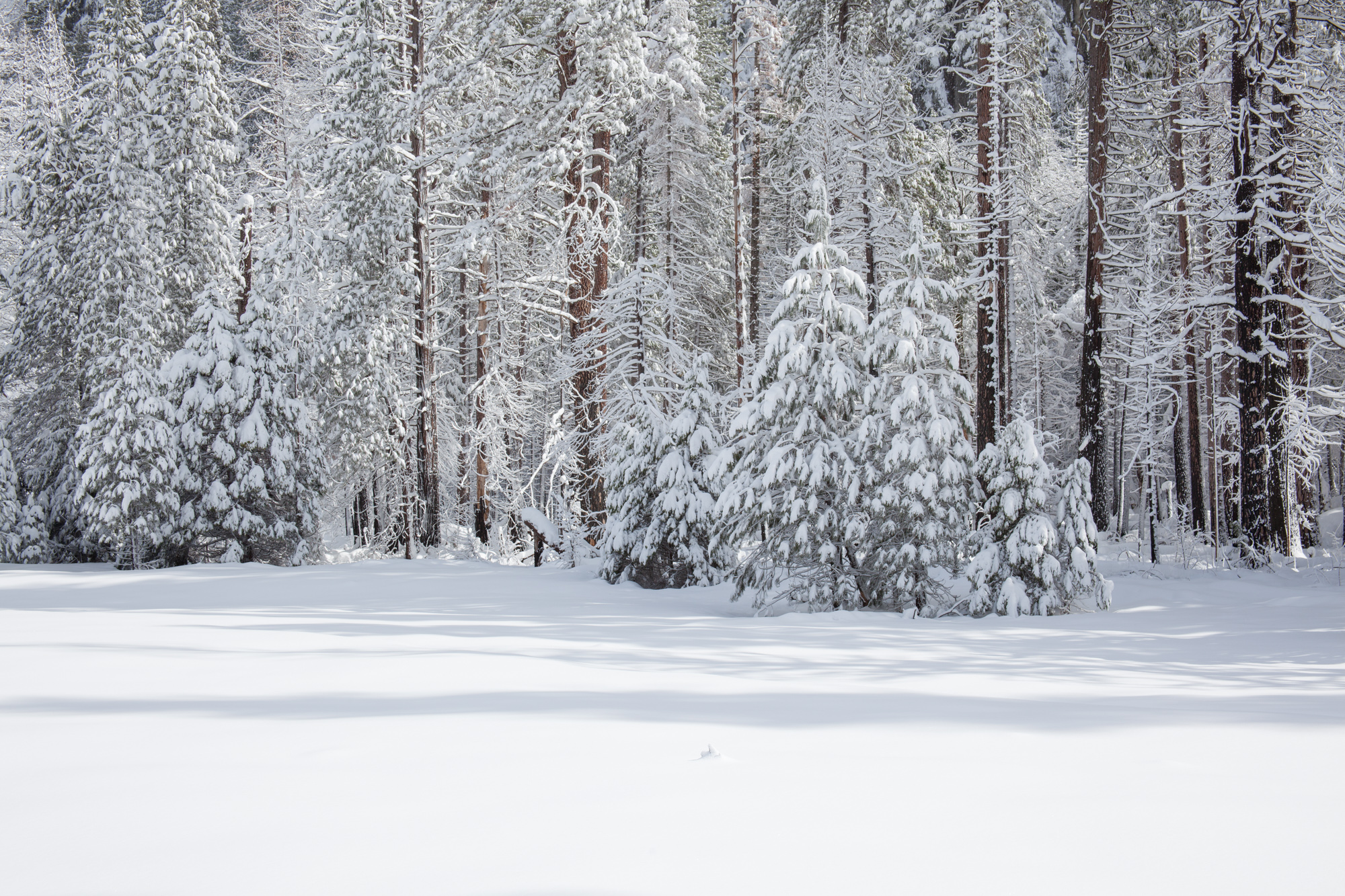 2019-02 Yosemite-37.jpg