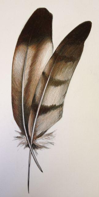 -eagle-feathers.jpg