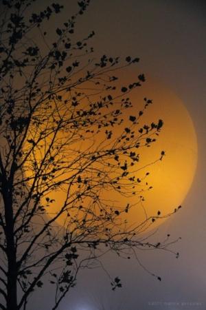 Golden Moon.jpg