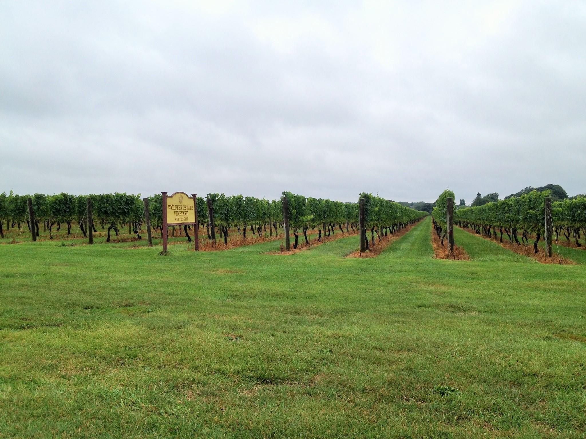 Wolffer Estate Vineyard Hamptons