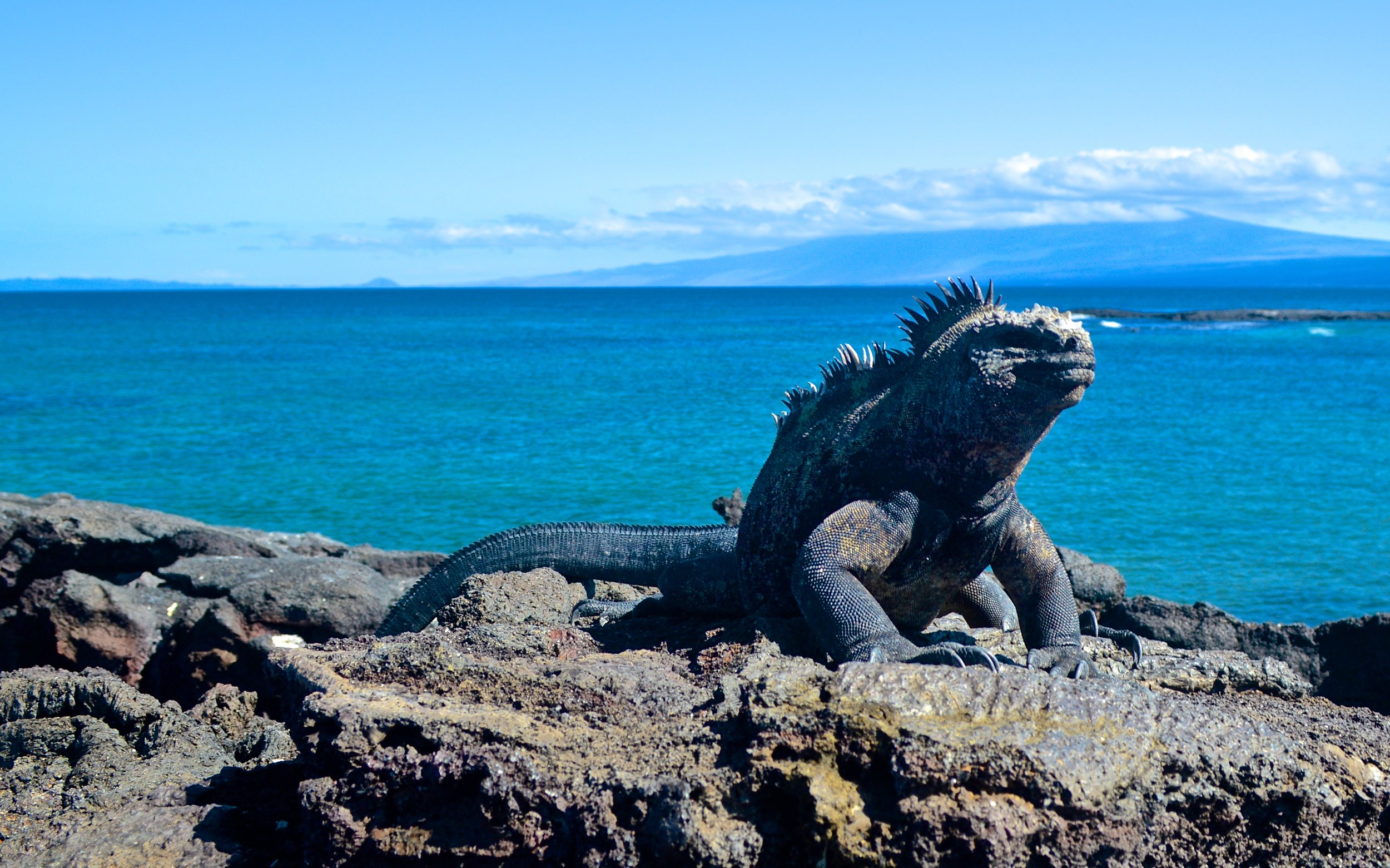 Galapagos_Photo_4_1.jpg