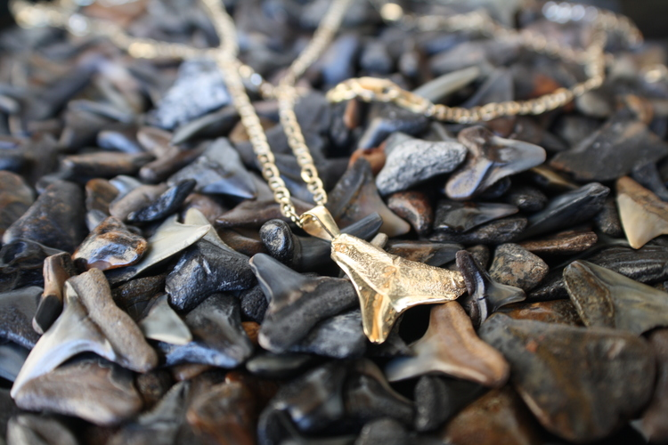 Jinx+Liggett+mens+necklace+yellow+gold+shark+tooth+necklace+on+a+gold+chain07.jpg
