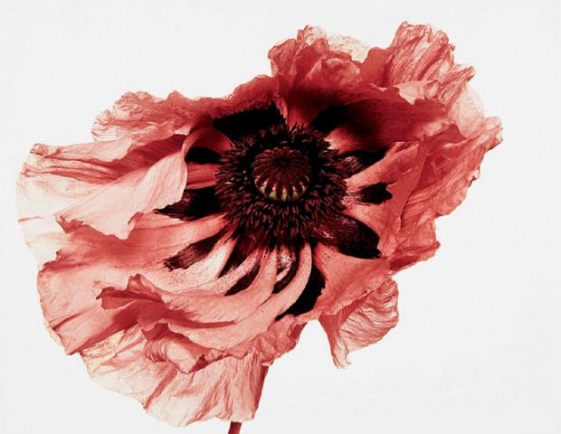 flowers_book_irving_penn_photographer.jpg