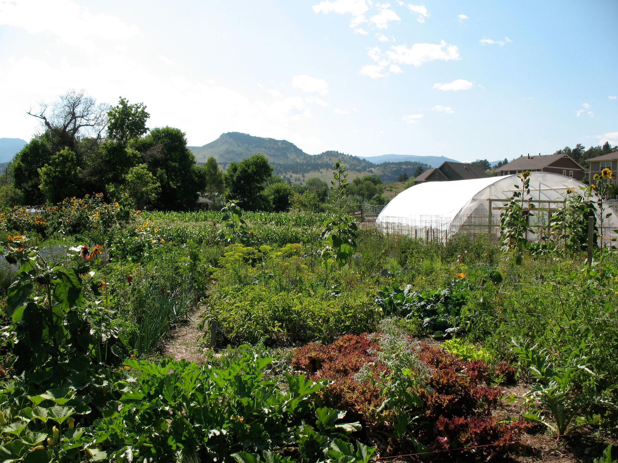 Farm-hoophouse.jpg