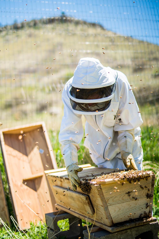 nelson-esseveld-lyons-farmette-beekeeping-07.jpg
