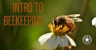 Beekeeping and more!
