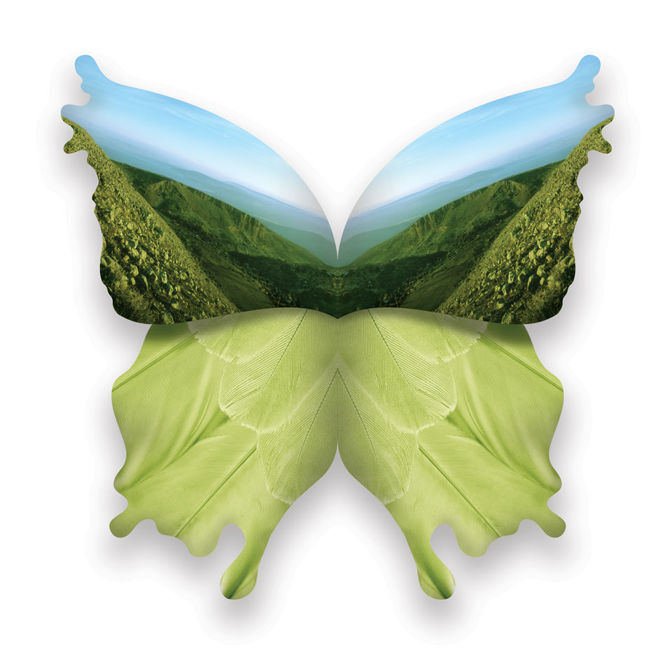 vlinder3.jpg