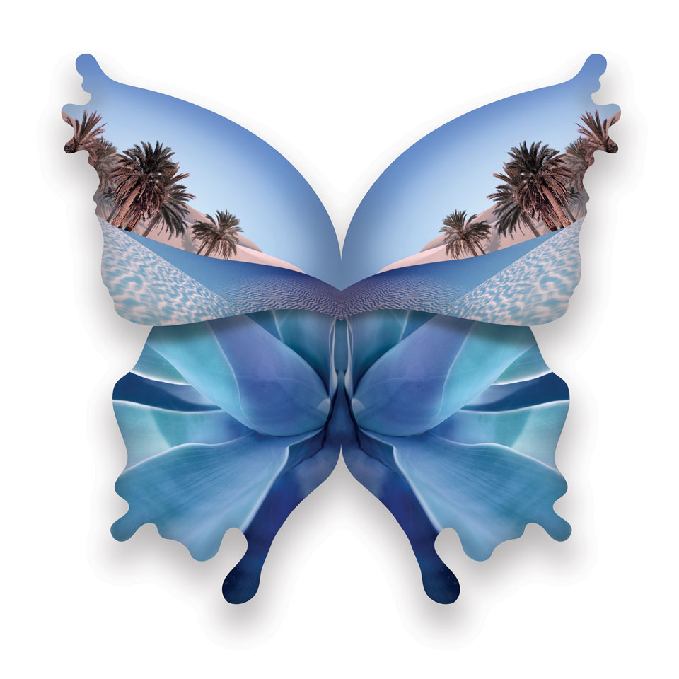 vlinder5.jpg
