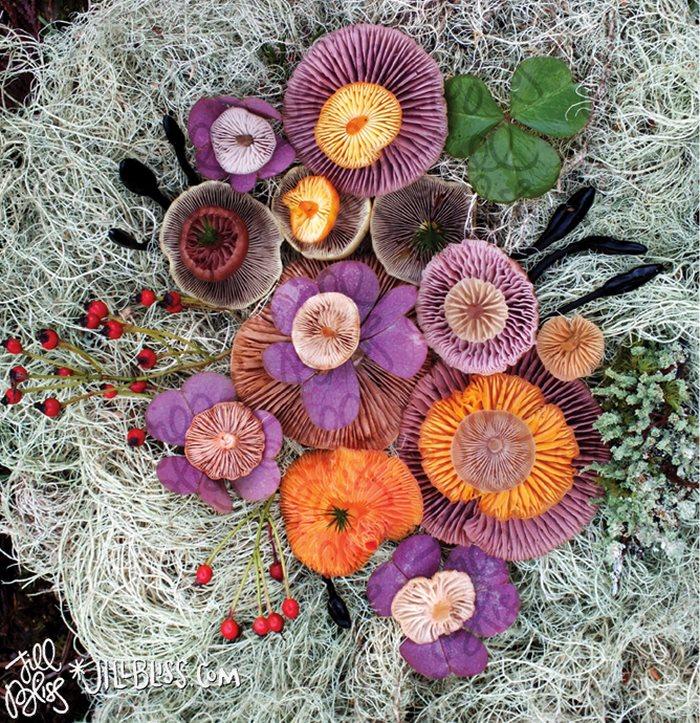 mushrooms-nature-medley-photos-jill-bliss-3-59895e1eb2e45__700.jpg