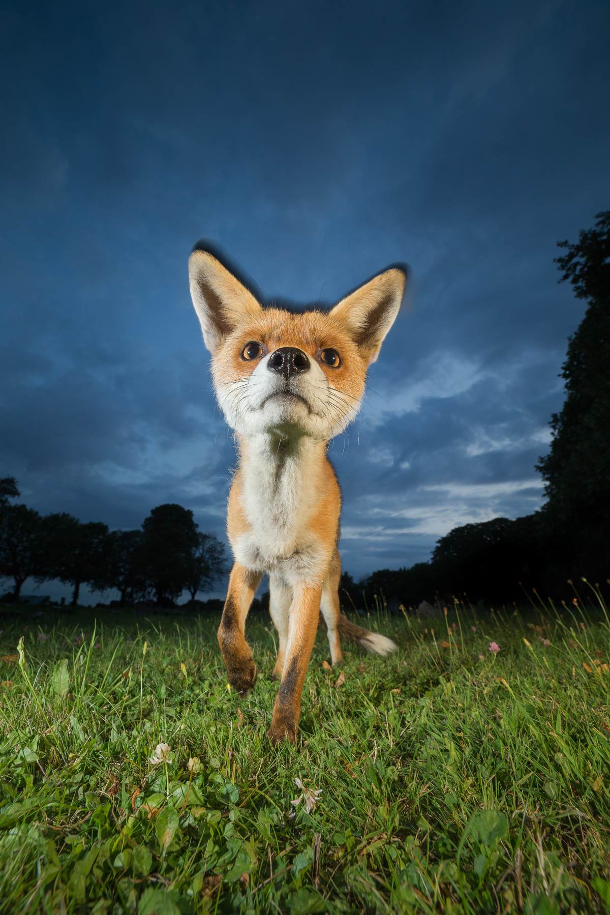 Fox Photography Workshop-4.jpg