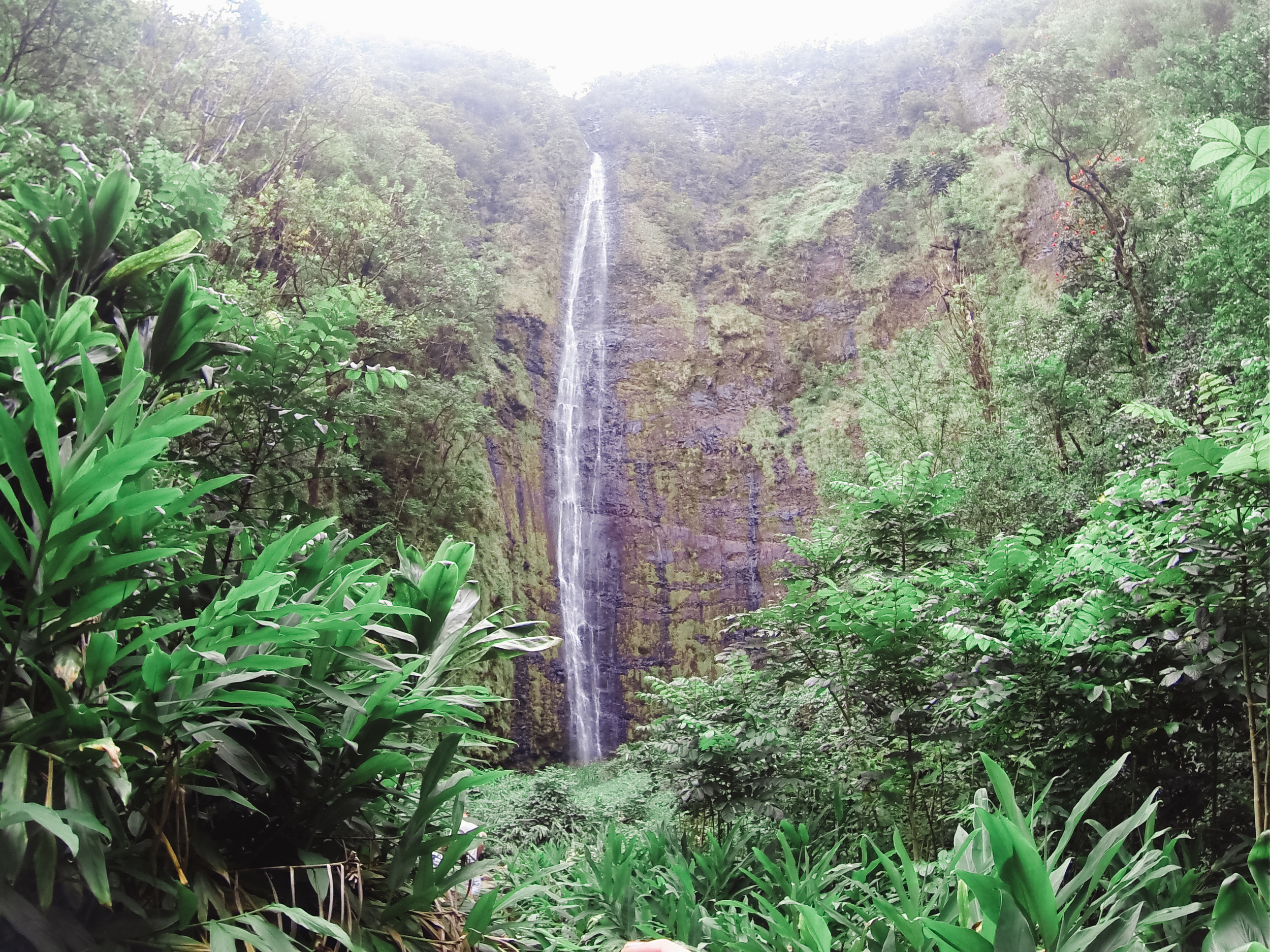 Waimoku falls is the turnaround point of pipiwei trail. 400 feet high, this beast of a waterfall can turn deadly during the lightest rains.