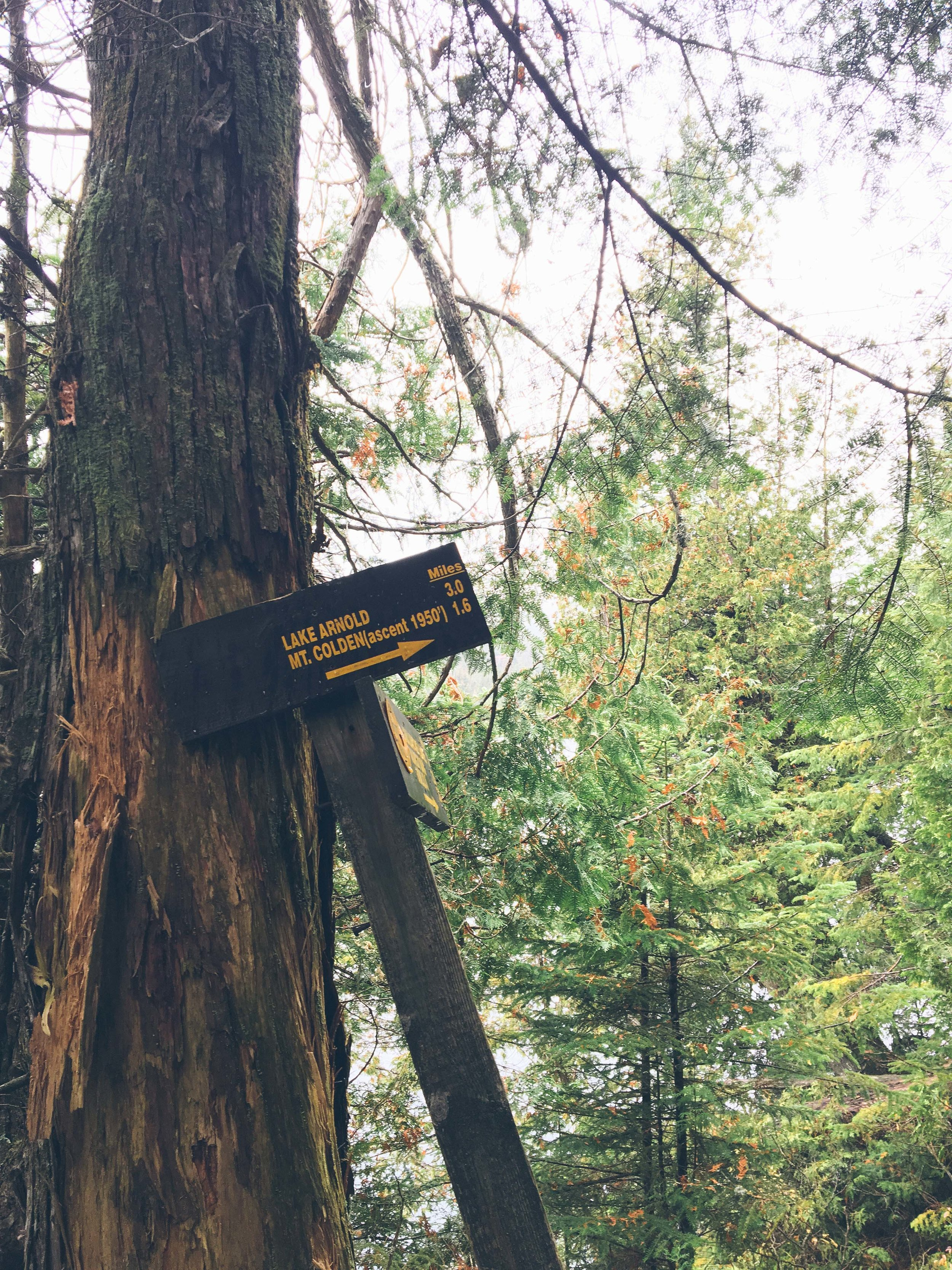 Mt. Colden The Adirondacks Misery Mile | Mountain Things
