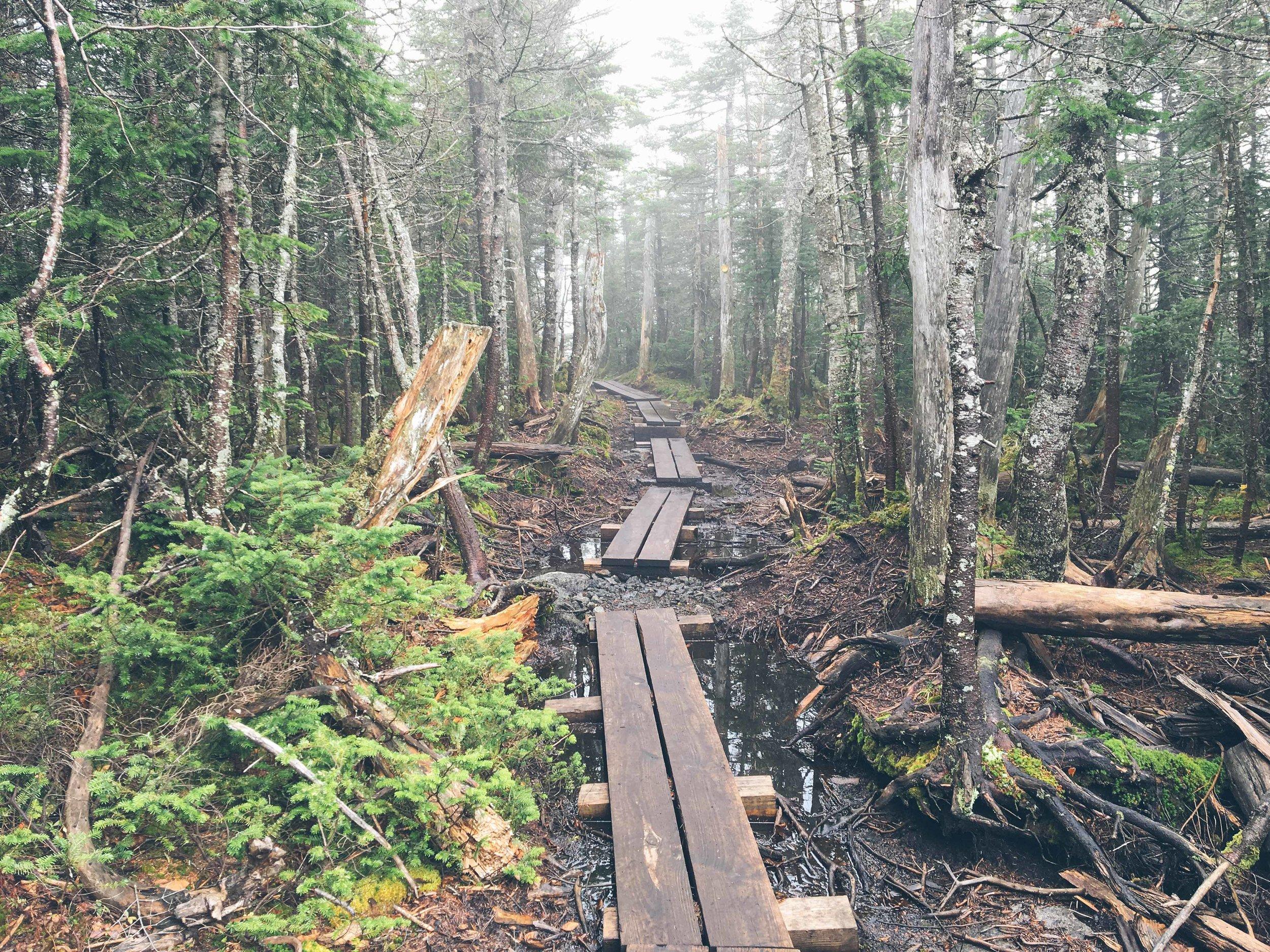 Mt. Colden Summit The Adirondacks | Mountain Things