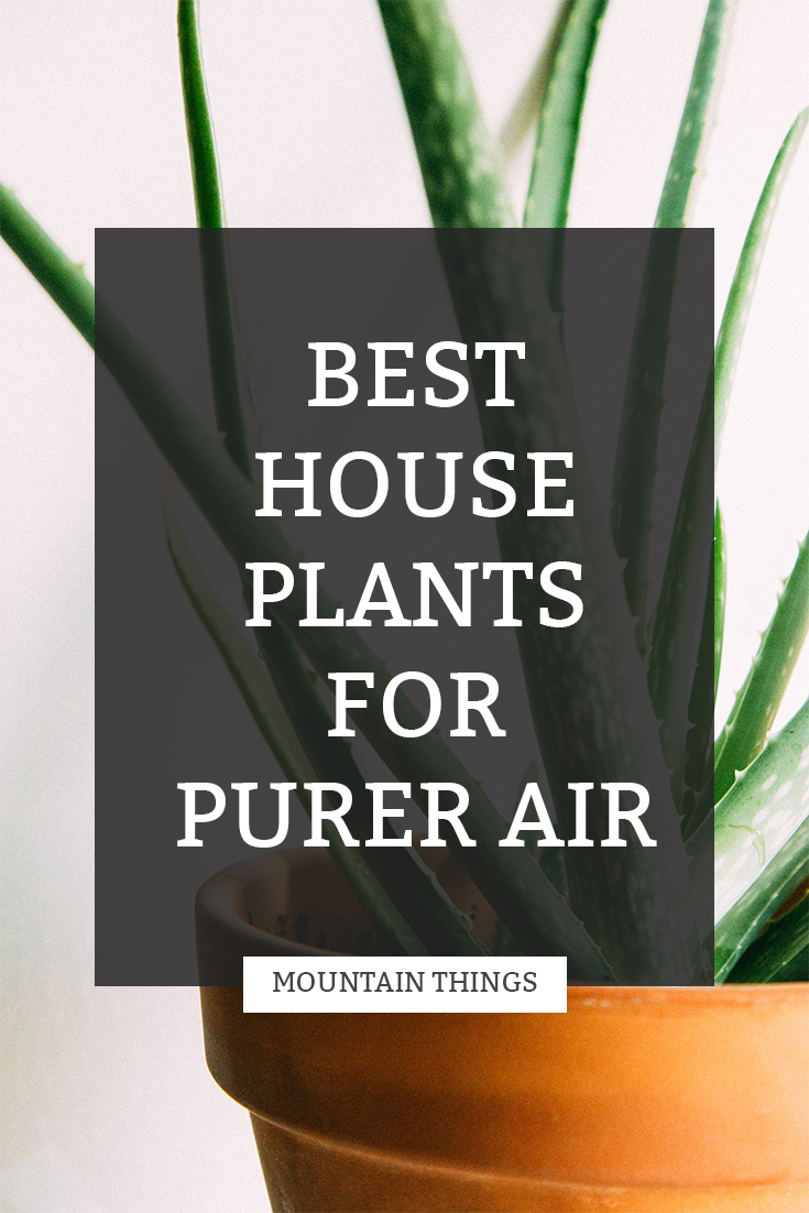 Best Houseplants for Purer Air | Mountain Things
