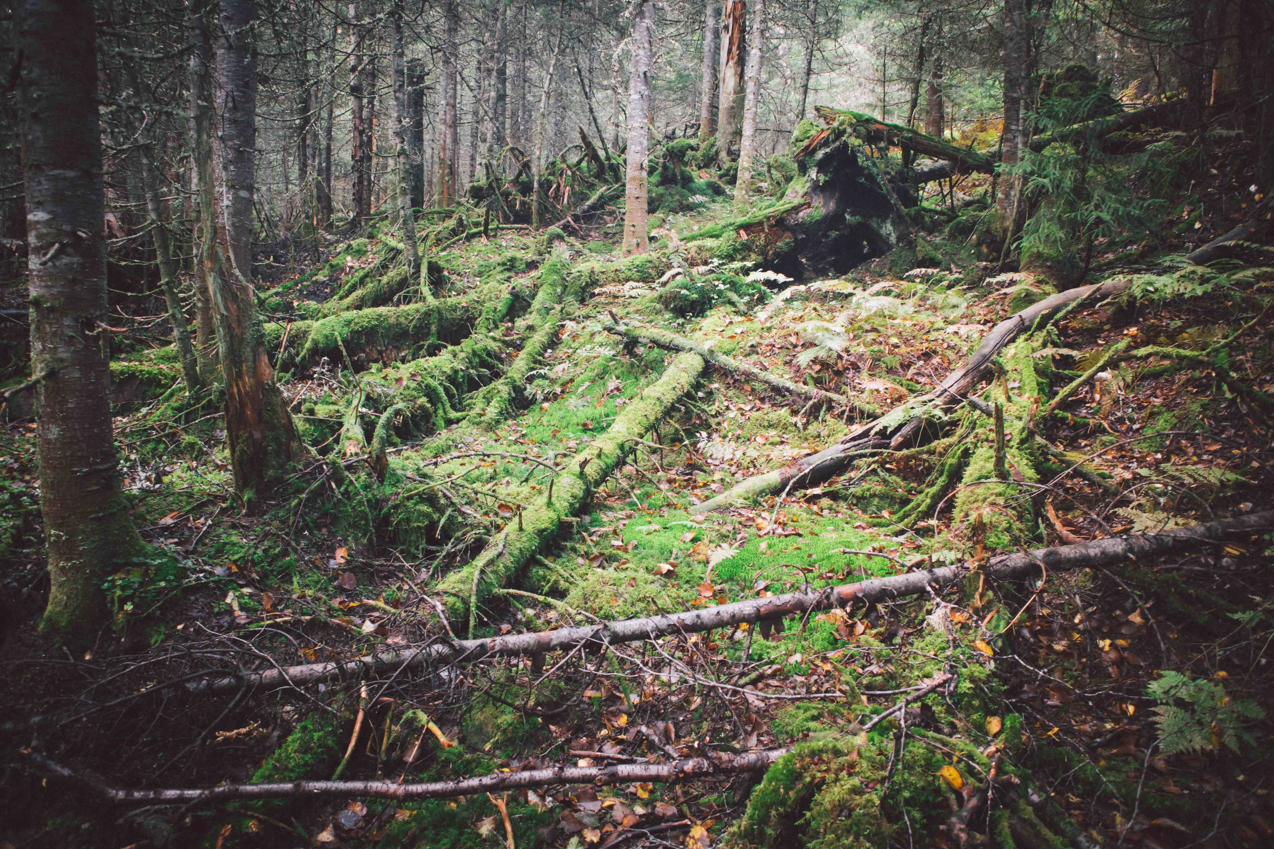 Adirondacks-2018-web-2-9-Mount-Marcy.jpg