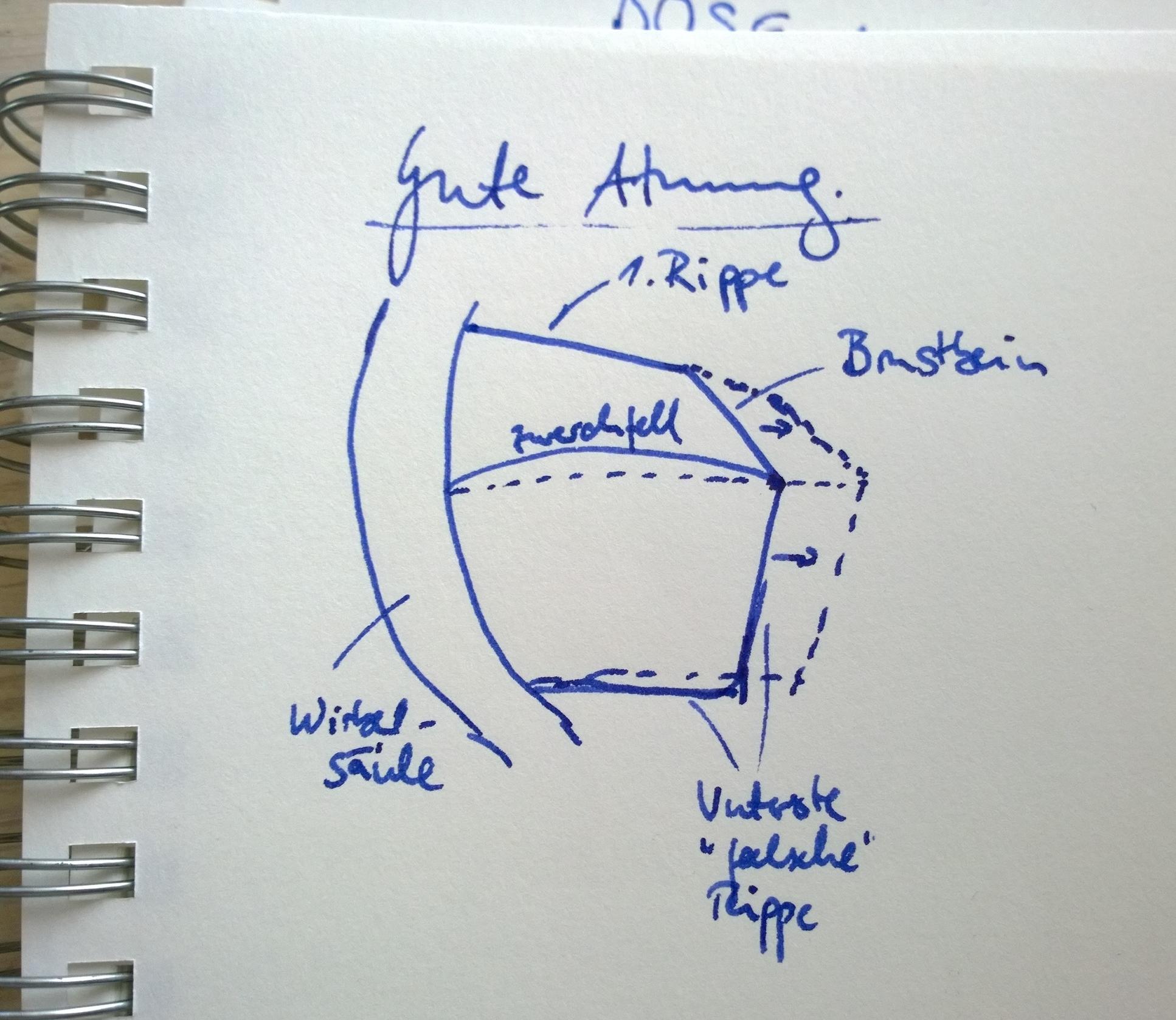GUTE Einatmung: Der Brustkorb weitet sich radial in alle Richtungen; das Zwerchfell flacht sich aus seiner kuppelhaften Neutralstellung ab und gibt stabilisierenden Druck in den Bauchraum; die Interkostalmuskeln weiten die Abstände zwischen den Rippen. [Durchgehende Linie: Neutralposition; gestrichelte Linie: Am Umkehrpunkt der Einatmung.]