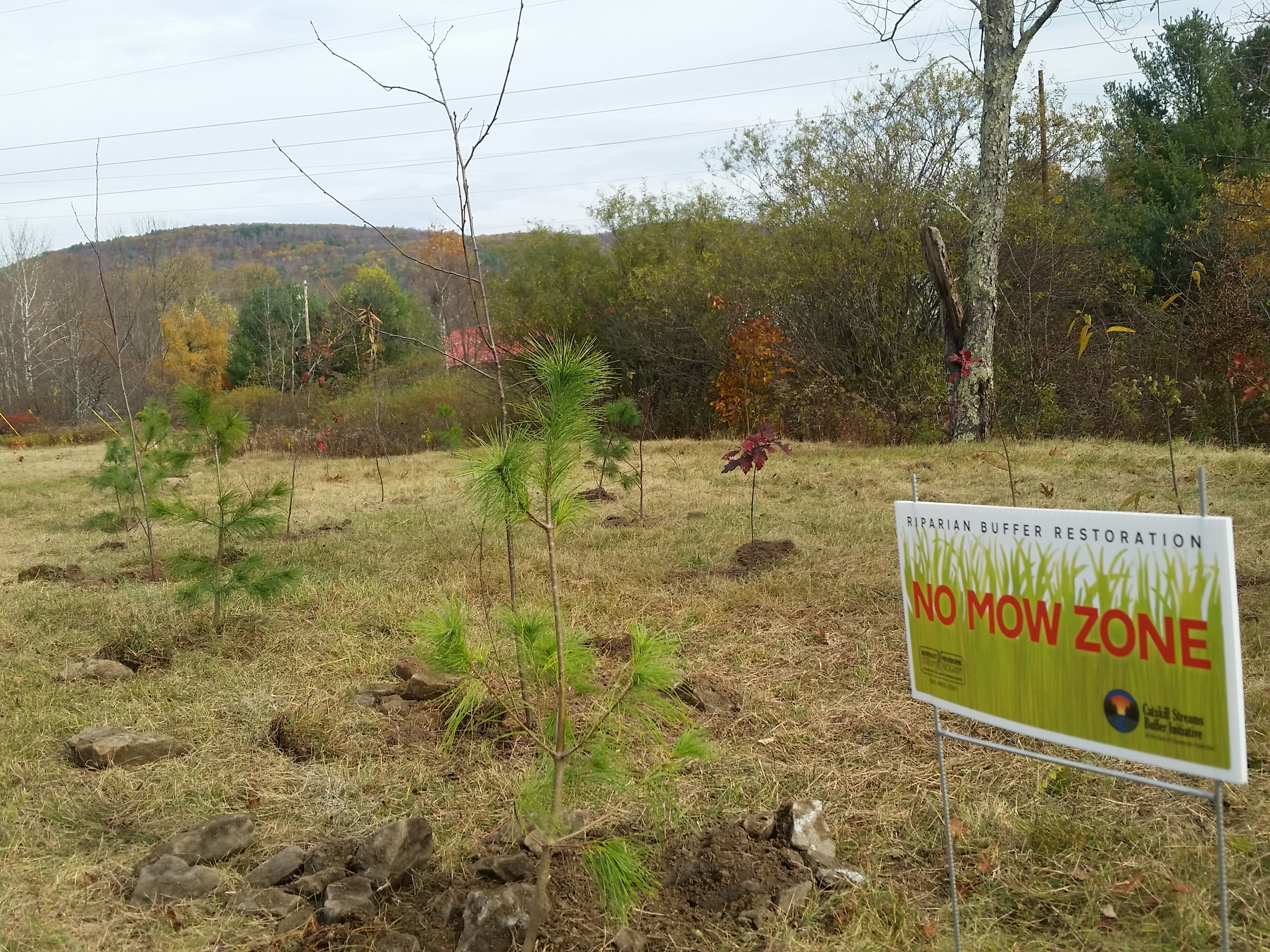 No Mow Zone and Buffer Planting, Red Brook and Chestnut Creek