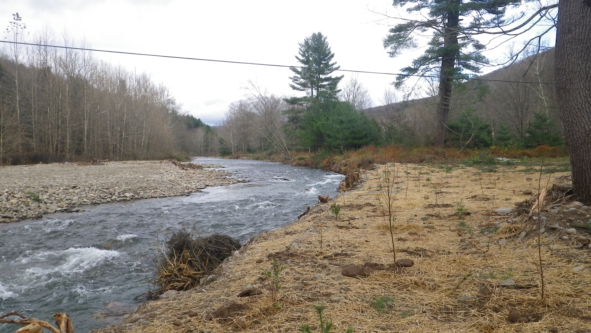 Root Wad Installation and Buffer Planting, Rondout Creek