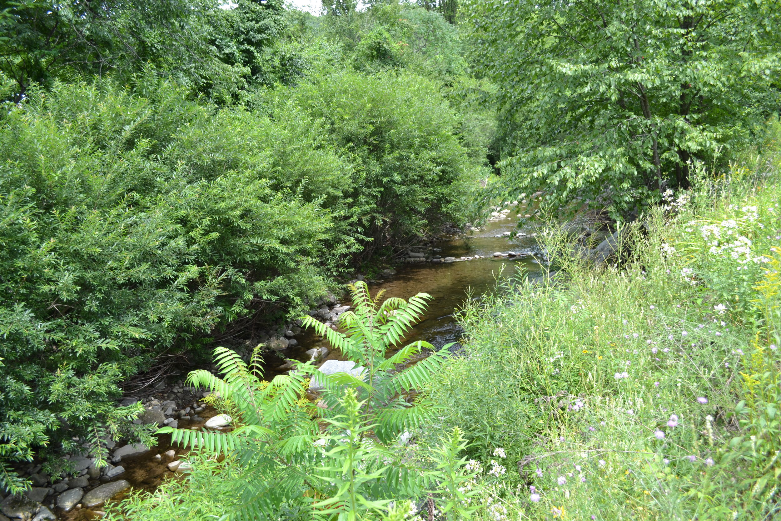 No Mow Zone and Willow Fascines for Stream Bank Toe Protection, Chestnut Creek