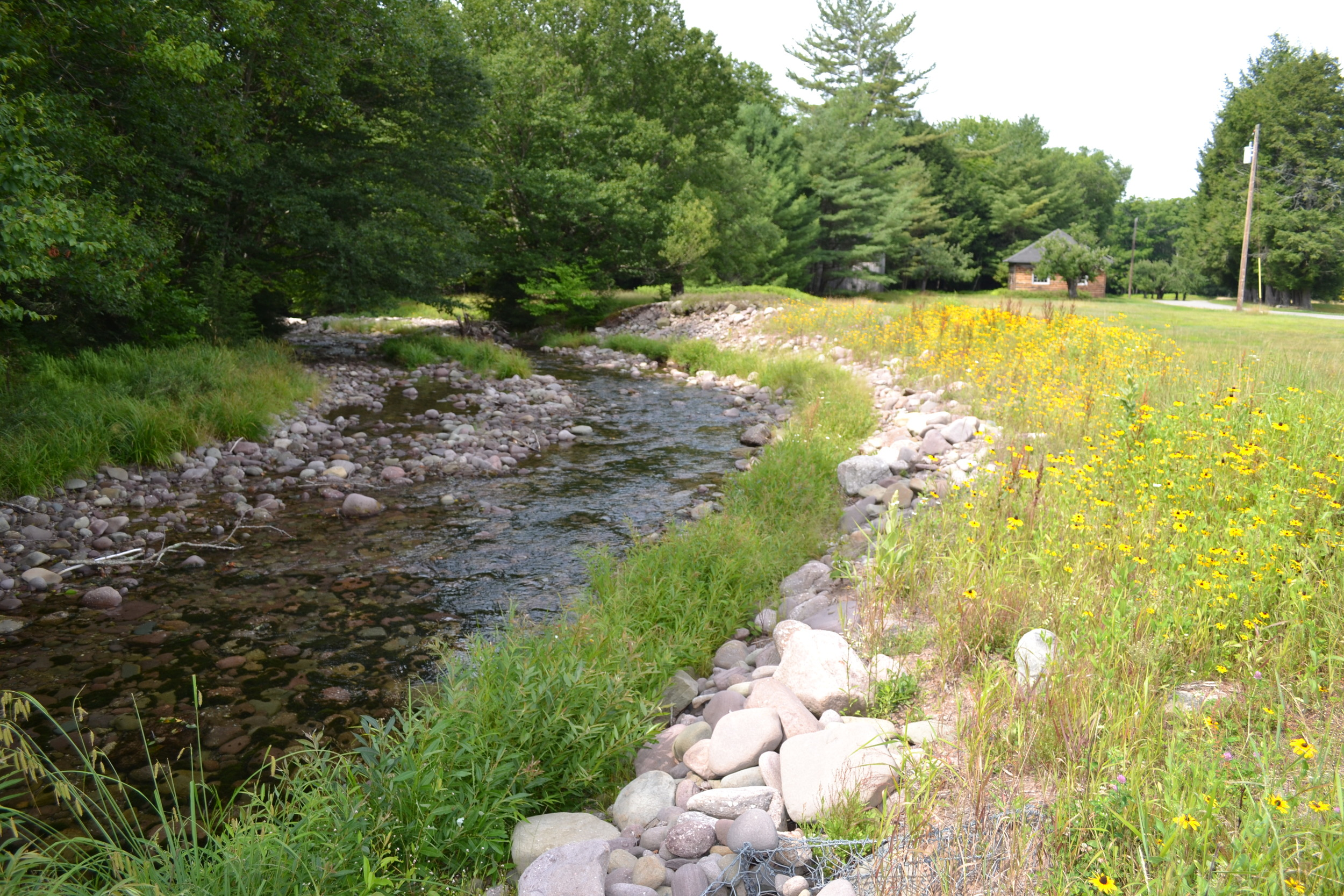 Stream Bank Toe Protection with Willow Fascines, E. Branch Neversink