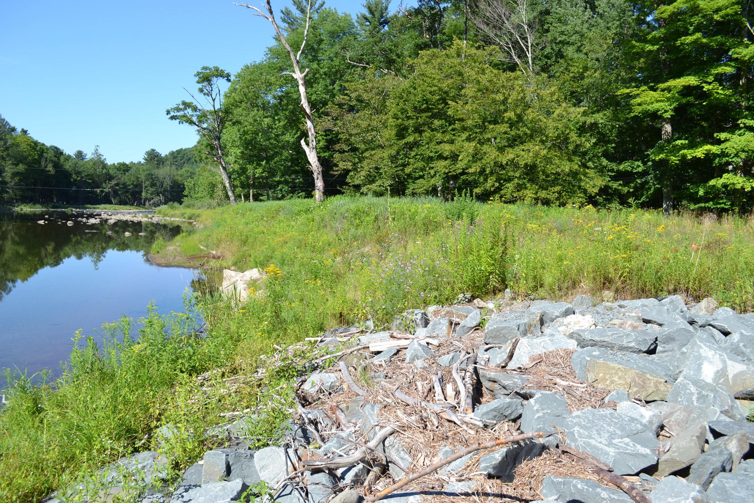 Riparian Buffer Planting at Halls Mills Covered Bridge, Main Stem Neversink River (CSBI)