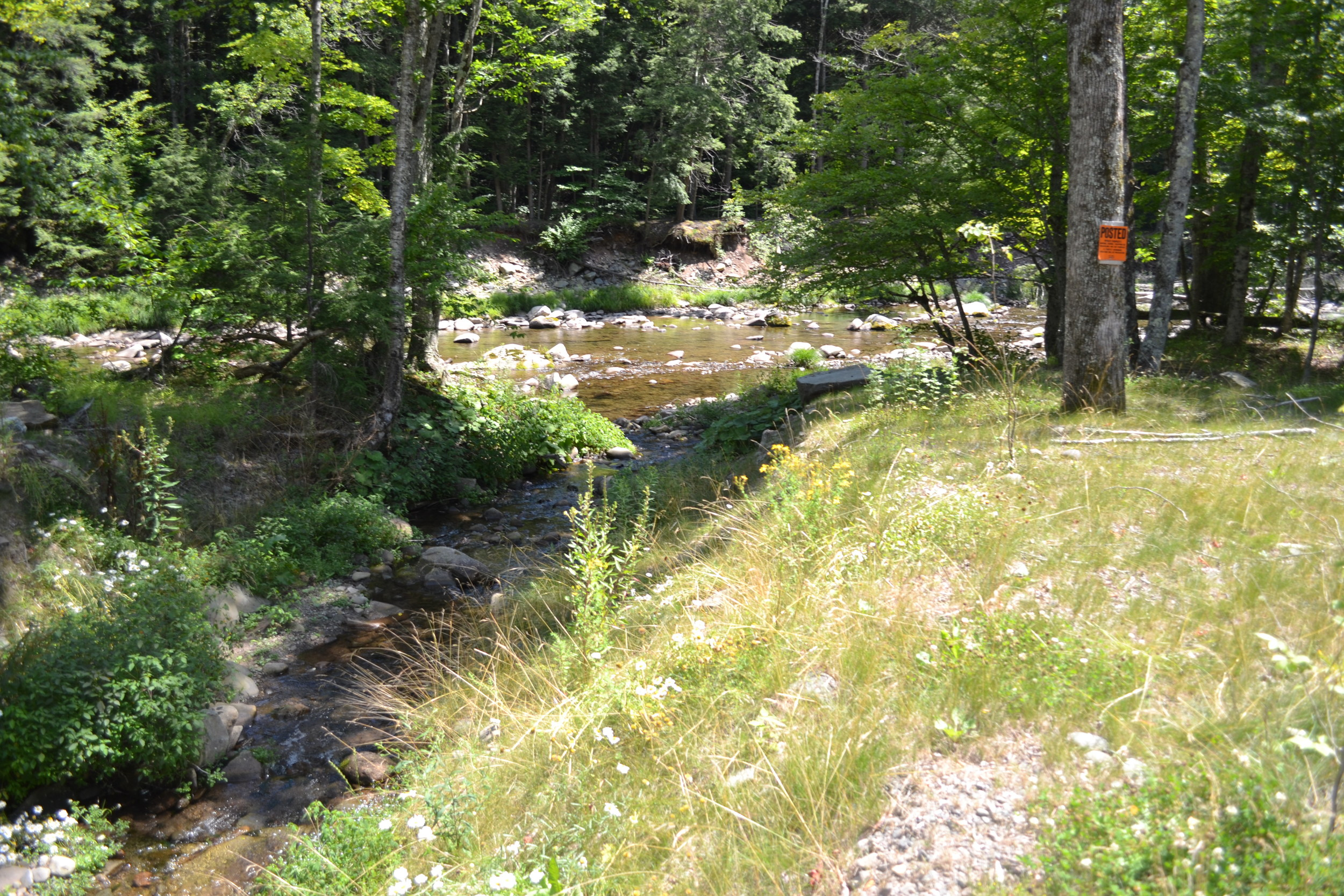 Buffer Planting at Culvert on County Road 157,Tributary to W. Branch Neversink