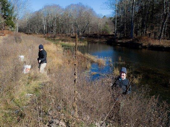 W. Branch Neversink River Frost Valley YMCA Buffer Planting (CSBI)