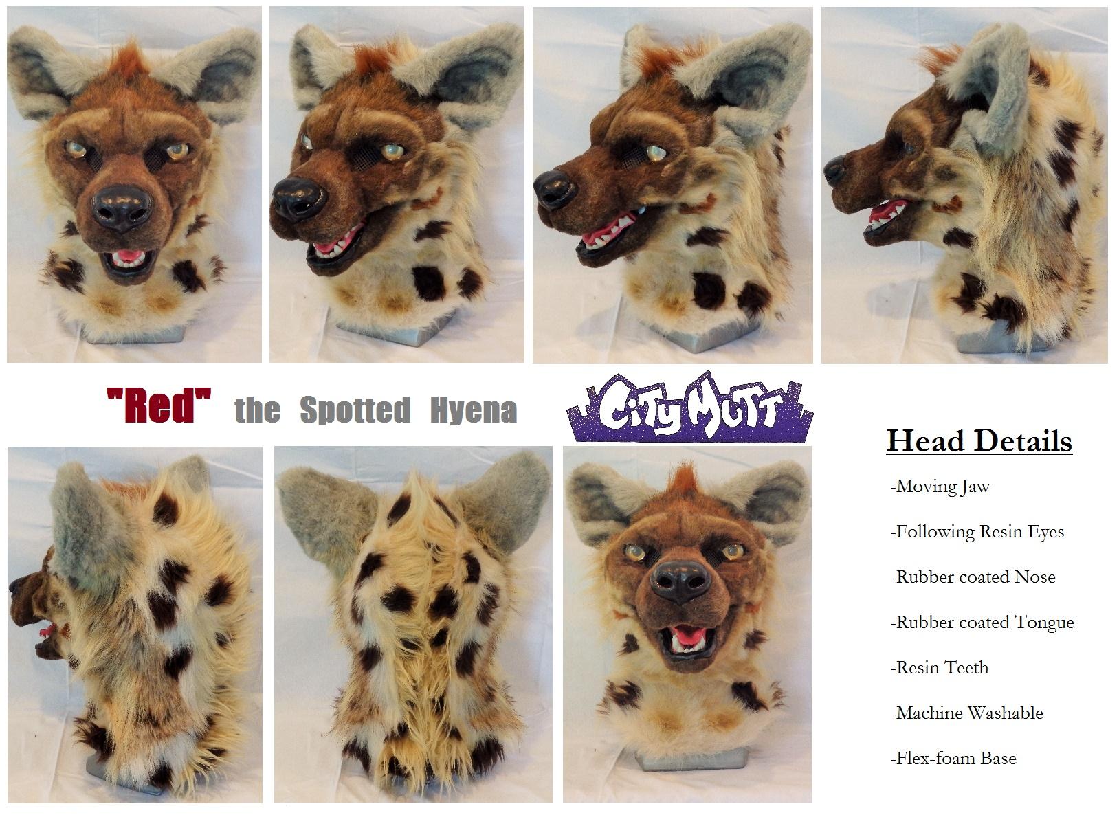 Spotted Hyena Panorama.jpg