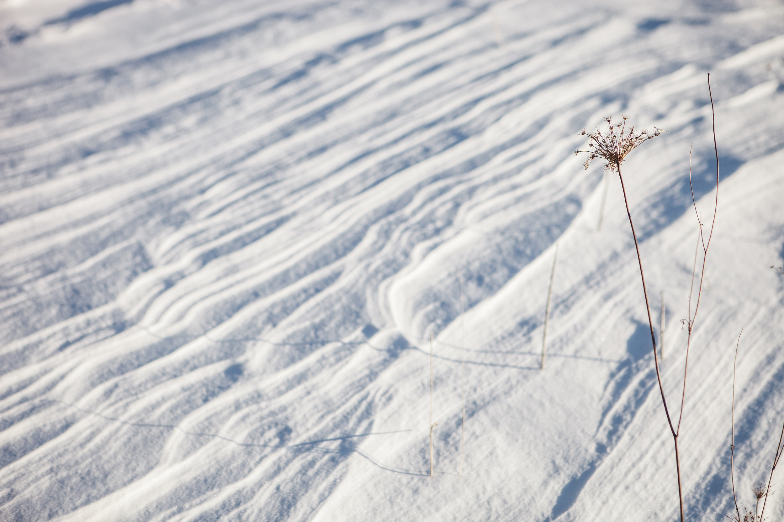 CindyGiovagnoli_Maine_Photographer_Winter_Mountains_Snow_Ski_Snowshoe-015.jpg