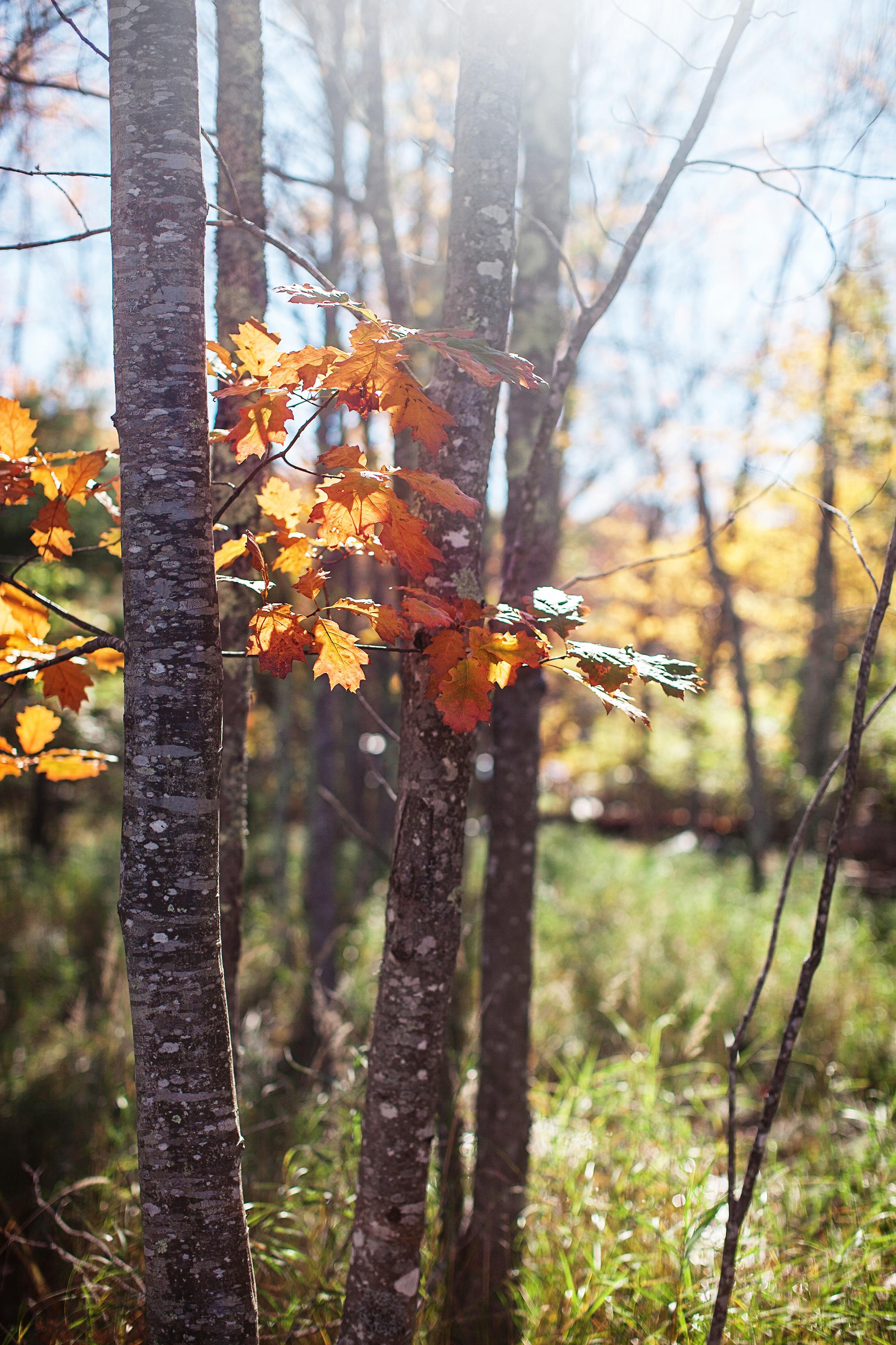CindyGiovagnoli_Autumn_fall_Maine-002.jpg