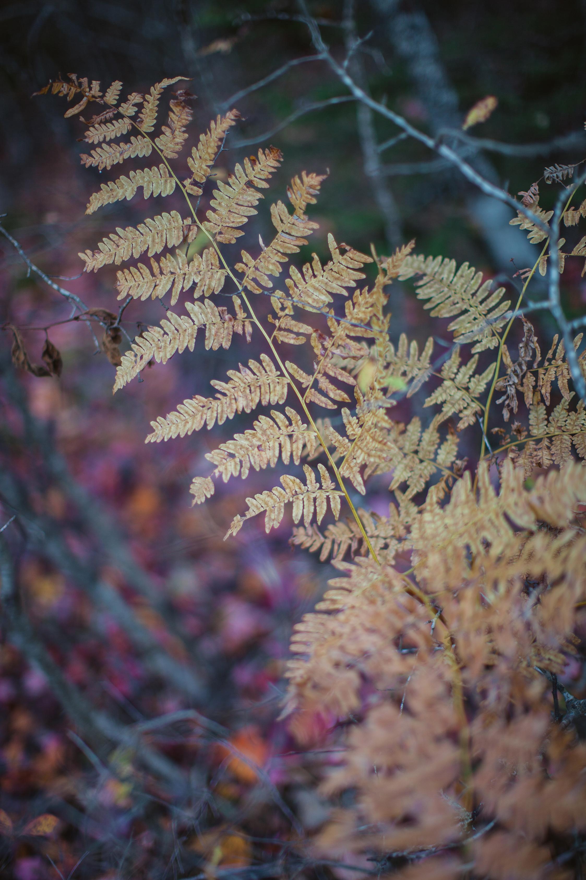 CindyGiovagnoli_Autumn_fall_Maine-007.jpg