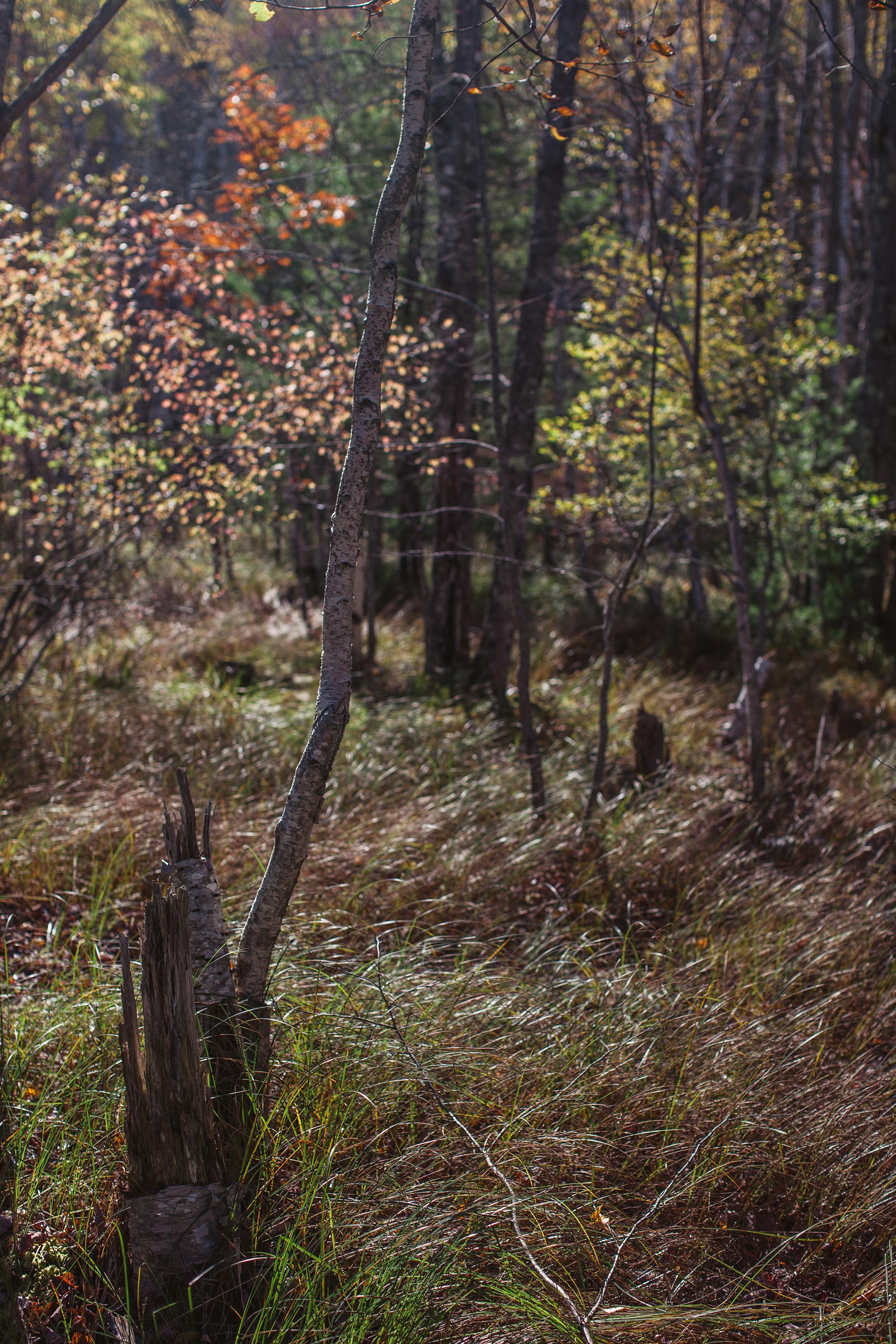 CindyGiovagnoli_Autumn_fall_Maine-006.jpg