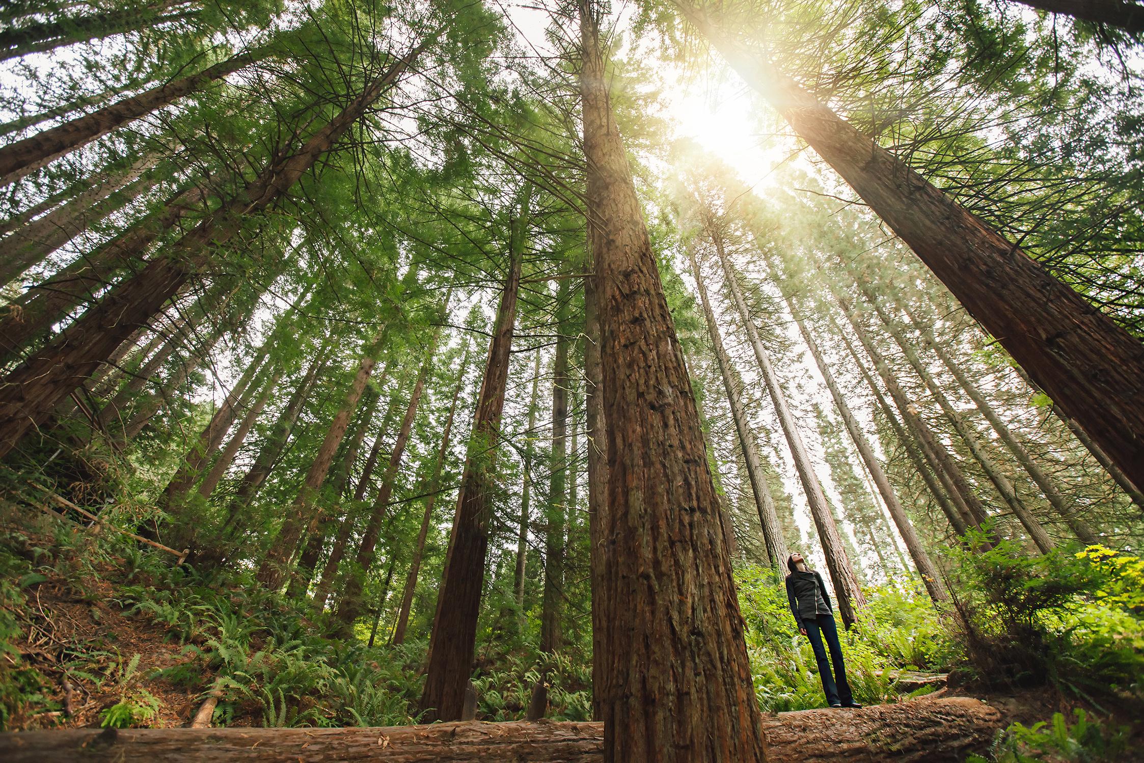 CindyGiovagnoli_Portland_Oregon_HoytArboretum_trees_Sequoia.jpg