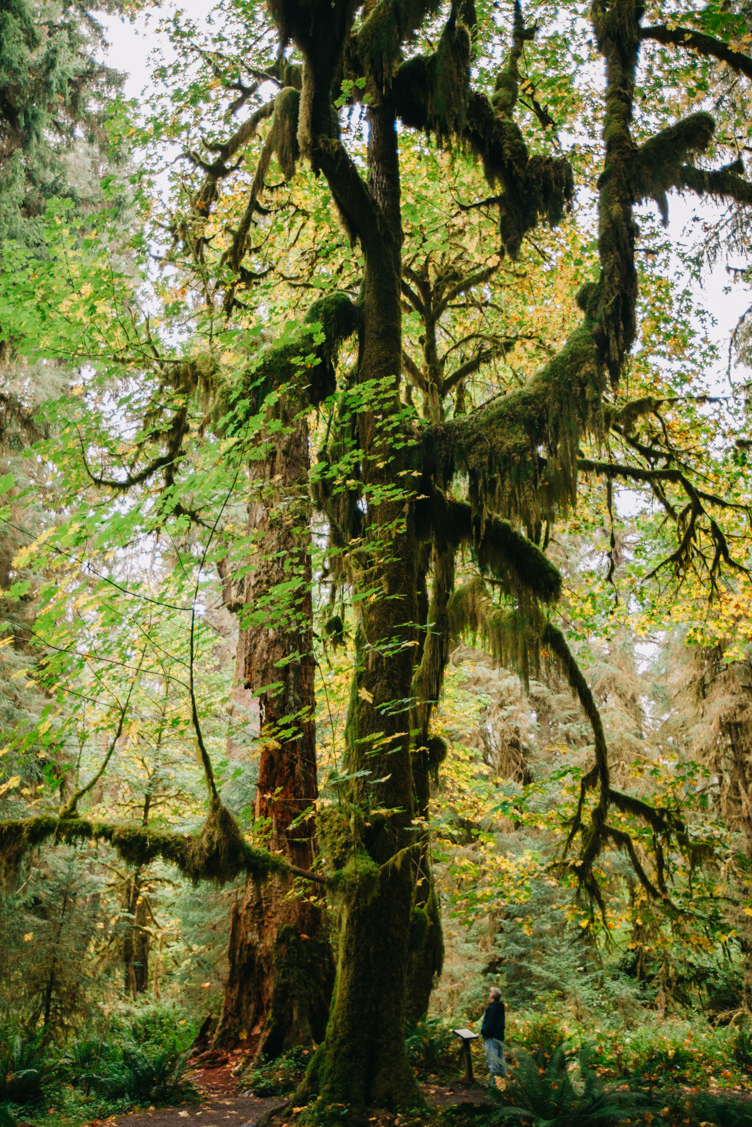 CindyGiovagnoli_MountRainier_Olympic_NationalPark_HohRainforest_Washington_MRNP_Camping-078.jpg