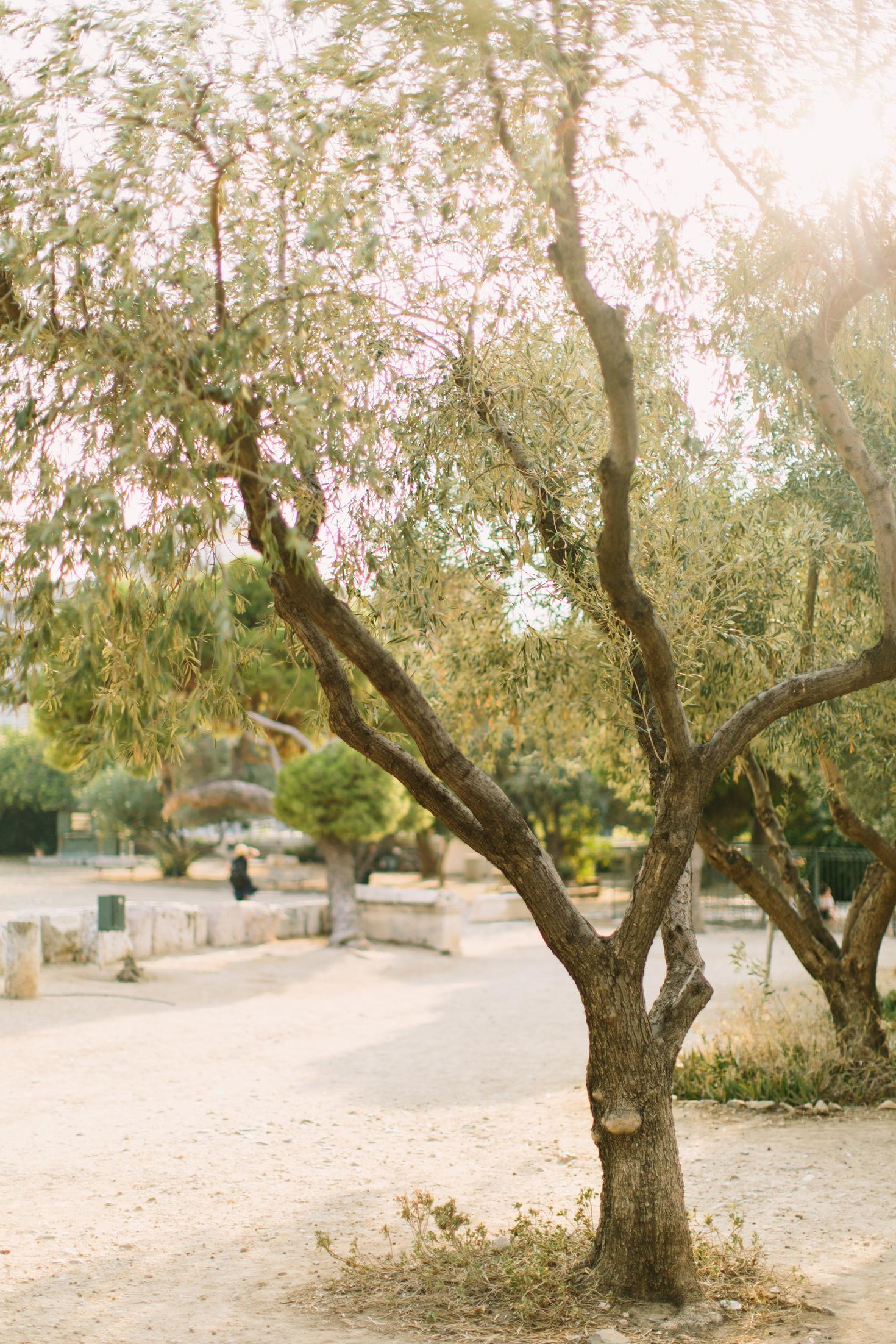 CindyGiovagnoli_Athens_Greece_travel_photographer-111.jpg